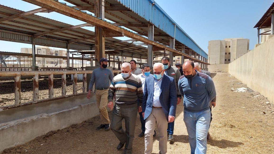 محافظ بورسعيد يتفقد محطة تسمين الماشية استعدادا لشهر رمضان