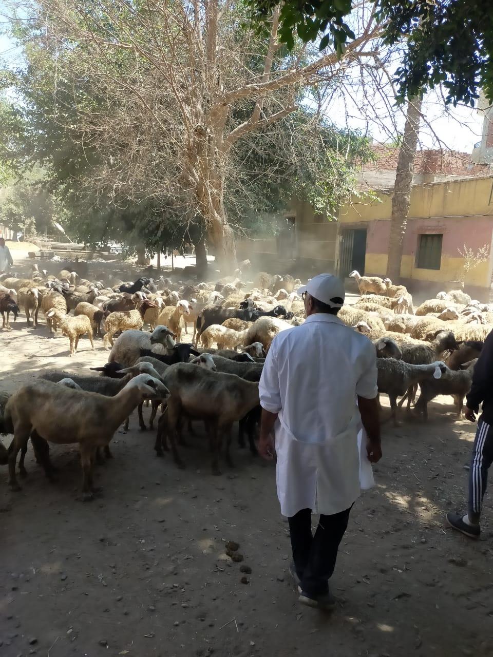 """""""الزراعة"""": اطلاق ١١٠ قافلة بيطرية مجانية خلال ٥ أشهر على مستوى المحافظات لعلاج اكثر من ٨٥ الف رأس ماشية و ٣٢ الف طائر"""