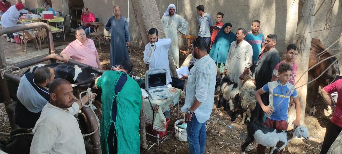 الزراعة: معهد التناسليات الحيوانية ينظم قوافل بيطرية مجانية في القرى الاكثر احتياجا بمحافظة الفيوم